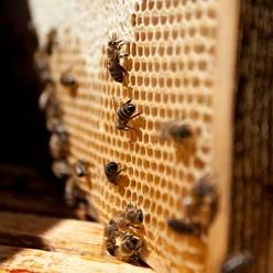 Medo-cukrové nebo cukrové těsto má u včelaře všestranné použití. Může sloužit při tvorbě oddělků a chovu matek, může být využito pro rozvoj včelstva nebo naopak jako záchrana pro včelstvo, které nemá dostatek vlastních zásob během periody, kdy není snůška.