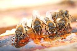 Včelaři si pochvalují, že se mohou spolehnout na bezpečnost cukrového krmiva APIVITAL® sirup a jako bonus zdarma k tomu dostanou komfort při práci na zakrmení včelstev na zimu. Včelaři potvrzují, že APIVITAL® sirup je správná investice, která se vrátí, protože tento tekutý CUKR PRO VČELY je čistý, neobsahuje jedy, balast ani zvýšené HMF a slouží tak výborně včelám, které mají být vitální.
